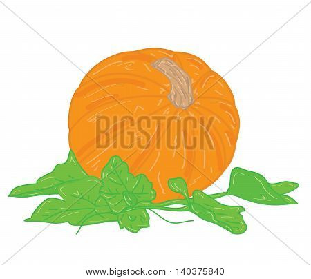 pumpkin with leaves on a white background. vector illustration