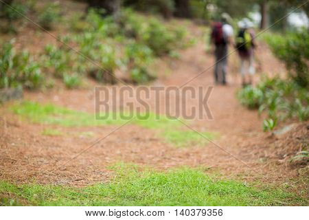 Hiker couple hiking in forest at countryside
