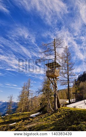View Of Alps Mountains And Pine Tree Forest. Spring In National Park Hohe Tauern, Austria.