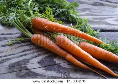 Ripe and fresh organic carrots on old wooden table. Harvesting bunch of young carrots on a wooden background. Agriculture gardening harvest healthy lifestyle concept. Orange clean deliceous carrots