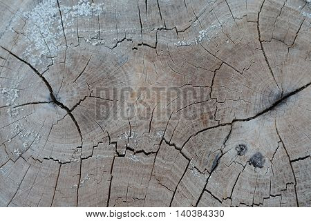 old tree cut stump in texture background