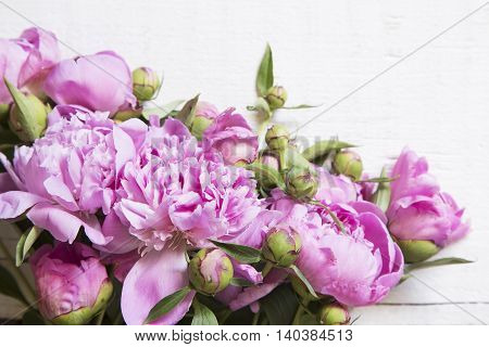 The pink peonies on white wooden background