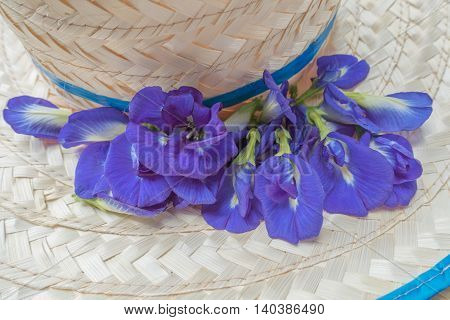 Butterfly Pea flowers on brim bangkok thai