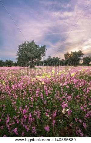 Vertical Landscape With Trees And Colorful Flowers Meadow On A Blue Sky Spring Day With Ice-Crystal Clouds