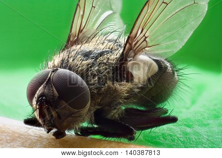 Photo of a fly close up on a colored background