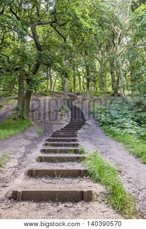 Flight of winding steps leading up deeper into woodland