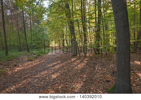 Empty road through the colorful autumn forest