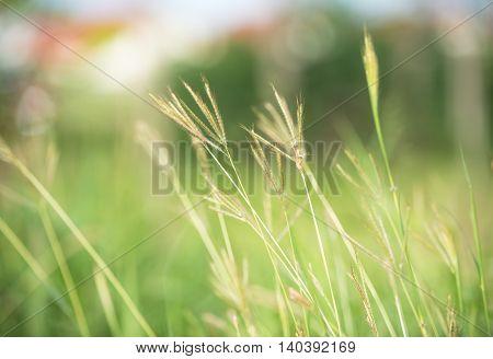 Grass( soft focus)/Grass( soft focus)/Green Meadow as a natural airflow
