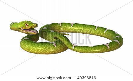 3D Rendering Green Tree Python On White