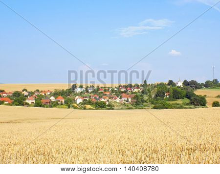 Village in the middle of wheat field during summer