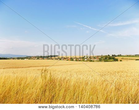 Wheat field and village in background during summer