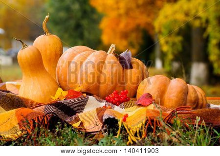 Typical autumn thanksgiving still life with checkered plaid, pumpkins, red berries and yellow leaves