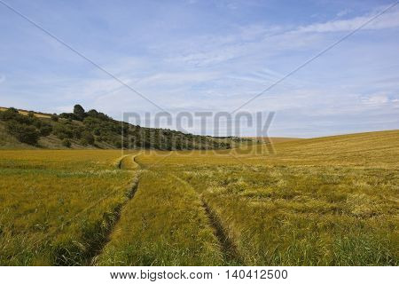 Wooded Hillside With Barley