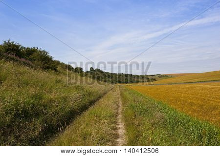 Farm Track And Barley Crop