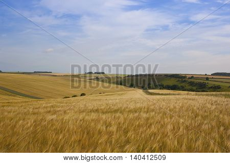 Picturesque Golden Barley