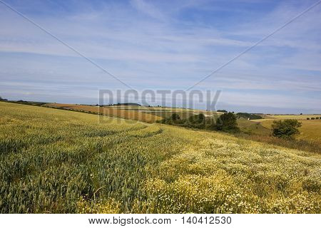 Wheat And Mayweed