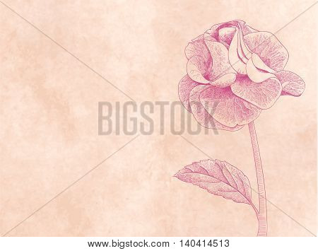 Hand drawn card with rose on pink paper background vector