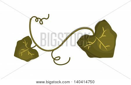 Green grape leave design elements Leaf icon vector illustration friendly nature elegance symbol. Decoration flora leaf icon. Natural element ecology symbol green organic tree.