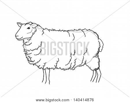 Vector Sheep Sketch Black and White Illustration