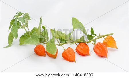 Orange fruits Physalis on a white background