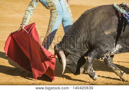 The Spanish Bullfighter bullfighting with the crutch in the Bullring of Baeza Spain
