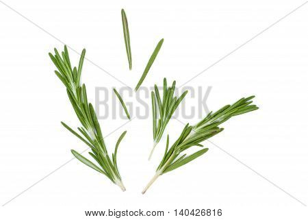 Isolated juicy green rosemary on a white background