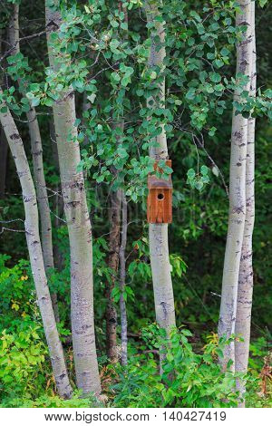 A wooden birdhouse in a grove of aspens.
