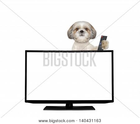 Cute dog watching television -- isolated on white