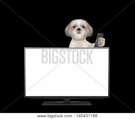 Cute dog watching television -- isolated on black