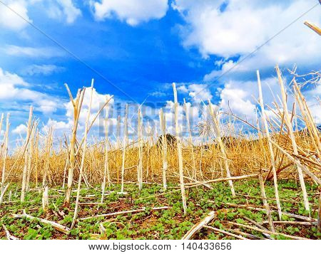 Field after harvest and partly cloudy sky