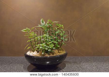 Ornamental plants in pots in  the room. background