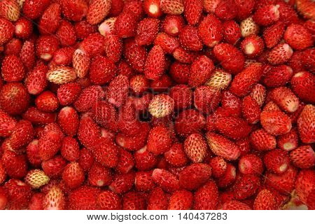 Big Bunch of Organic Wild Red Strawberries