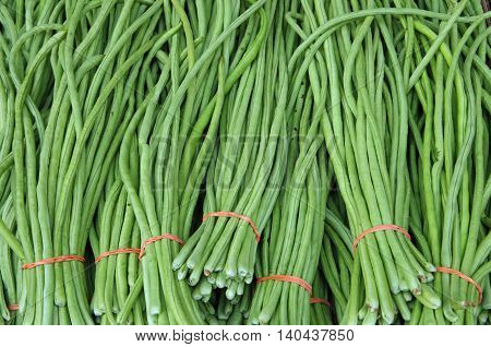 Chinese green long beans bunched with colorful rubber band for market