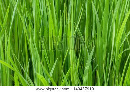 Closeup of long blades of grass on a sunny day