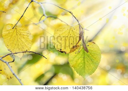 close up shot of colorful leaves during autumn