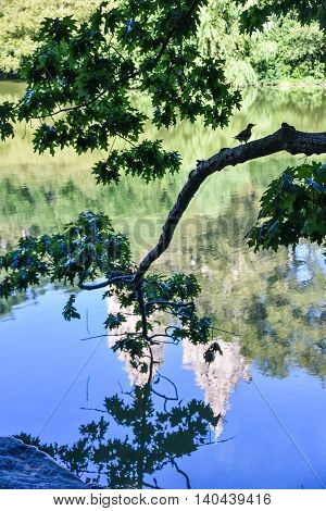 A tree branch goes into the lake with a bird on it near a rock