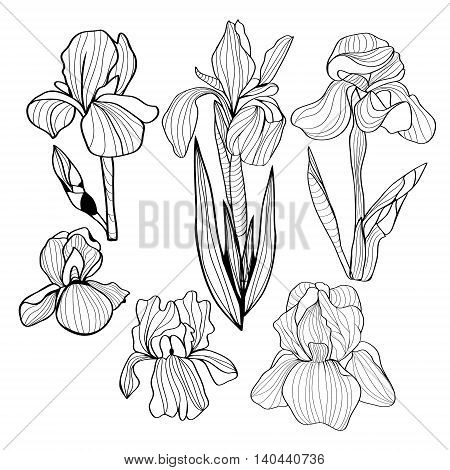 Blooming and budding iris flowers black and white set of a flower of iris. Vector Monochrome illustration