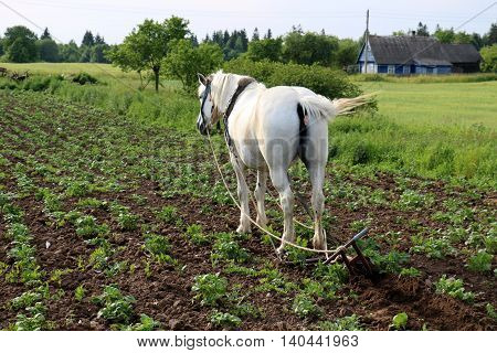 horse pet and helps a person to dig up the garden