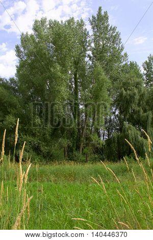 Hidden trail to a sunny prairie grove