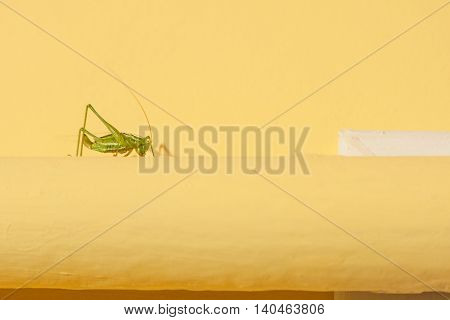 Green grasshopper on a yellow tube with a place for your text