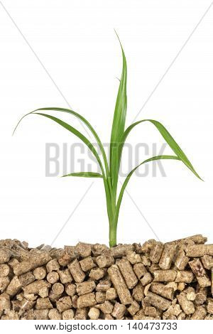Concept of energy conservation: green plant is growing from the pressing wooden pallets isolated on white background