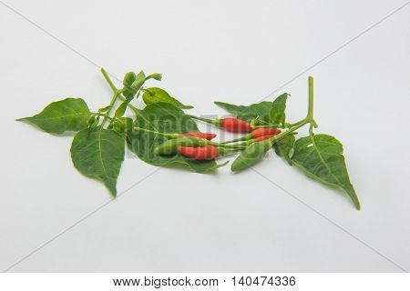 Leaf red and green  chili on White background