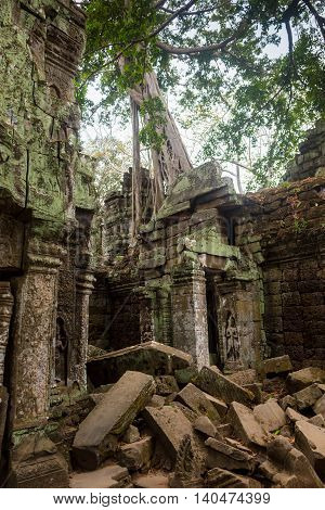 The jungle encroaching on Ta Prohm Temple, Angkor, Cambodia.