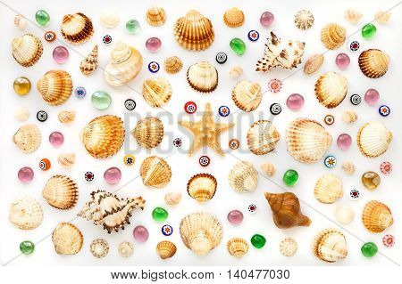composition of different sea shells and glass beads on a white background. top view