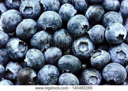 Blueberries (bog whortleberry, great bilberry) as a background