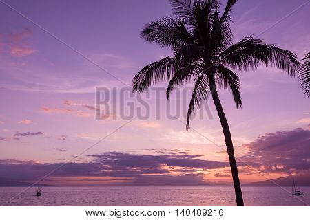 a palm tree silhouetted against a beautiful maui sunset