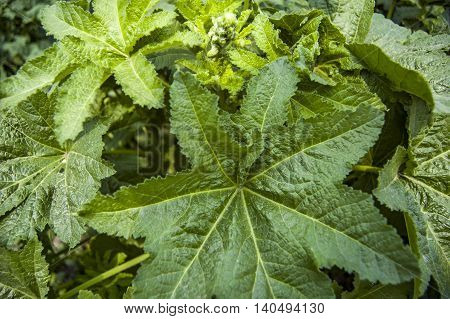 Green leaves to create the background and for the texture