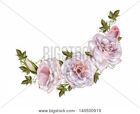 Bouquet of pink and pastel roses. Flower composition. Isolated on white background