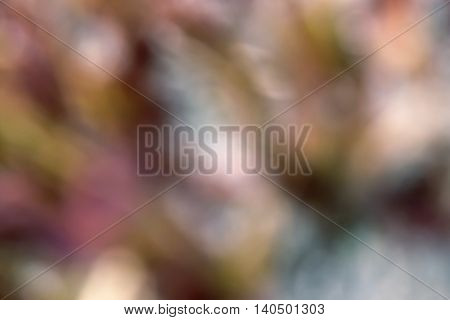 The background image in red color with indistinct contours of flowers and plants.