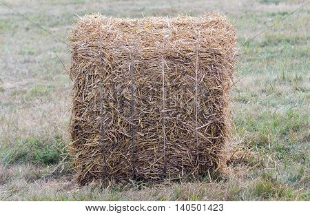 Packed in a bale of straw on the field after harvest.